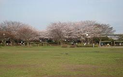 【ユーカリ地区活動場所②】南公園